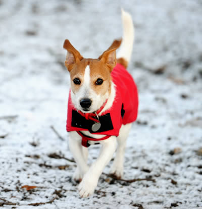 Caring for Your Dog During the Winter